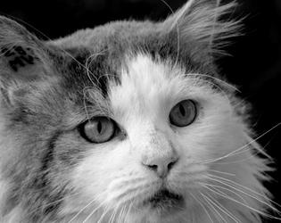 Adoptez un chat FIV